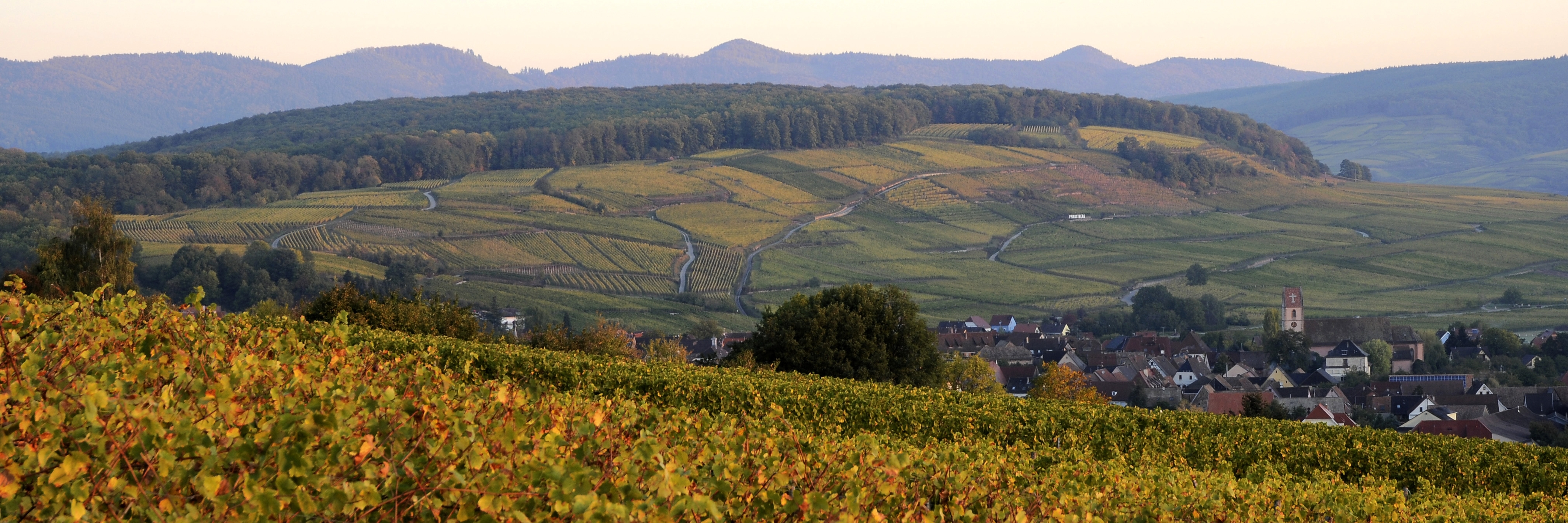 Grand Cru PFINGSTBERG